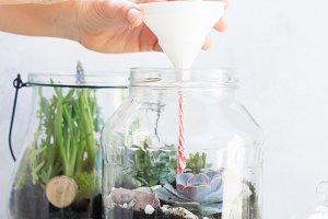 garden inside mason jar