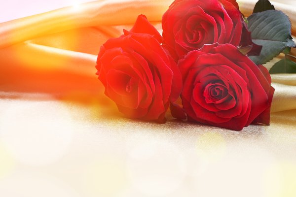 red roses on silk background