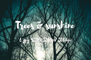 Trees and sunshine