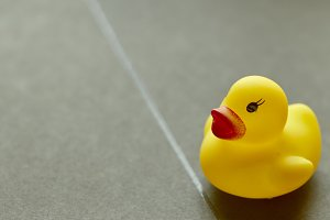 Yellow rubber duck on black background