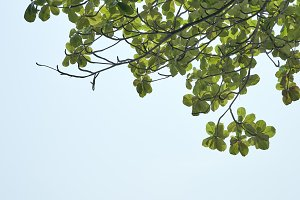 Green leaves in front of  sky