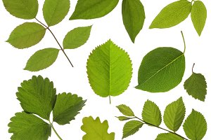 set of isolated green leaf