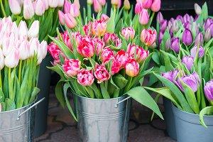 Beautiful spring flowers tulips