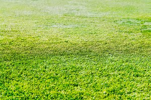 Fresh green grass on football field background