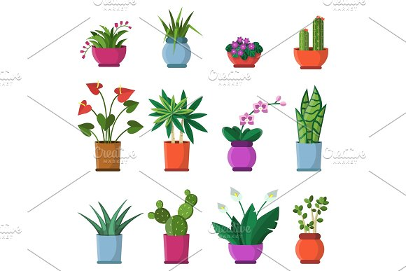 Vector Illustrations Of House Plants In Pots