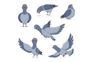 Cartoon set of funny pigeons. Illustrations of birds