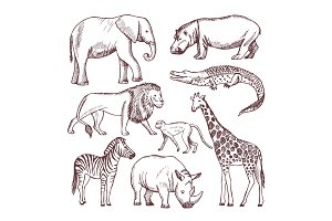 Different animals of savana and africa