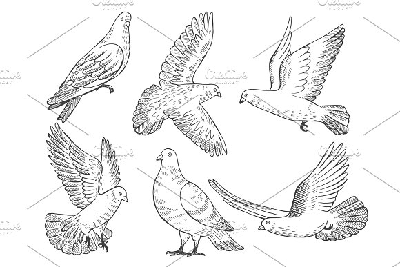 Illustrations Set Of Pigeons Hand Drawn Pictures Of Birds Isolate On White