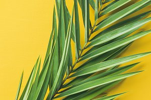 Green palm branches over yellow background, top view, narrow composition