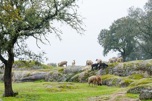 Extremadura Meadow