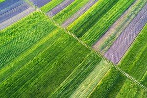 Agricultural aerial landscape