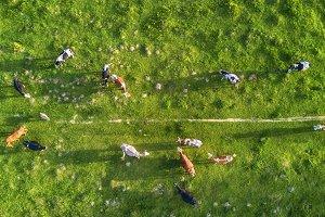 Aerial composition on the farm