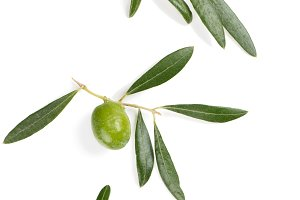 Olives on a branches, close up.