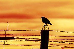 Bird on prison fence at sunset