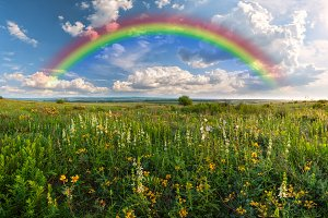 Rainbow over flower meadow
