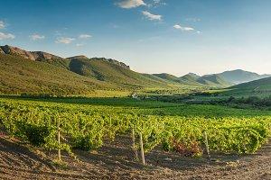 Vineyards in mountain