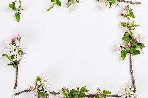 Apple twigs in bloom.