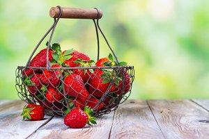 Summer harvest of fresh organic strawberry