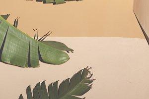 palm leaves on street
