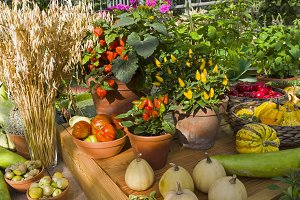 Exhibition of fruits and vegetables