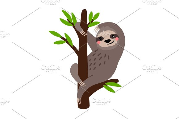 Sloth Cute Vector Sloth Bear Animal Character On Tree Branch Isolated On White