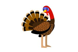 Turkey. Vector thanksgiving traditional turkey bird animal closeup illustration