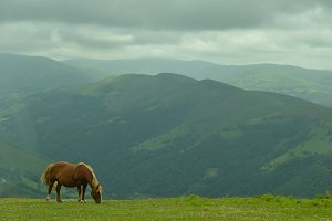 Horse in solitude.