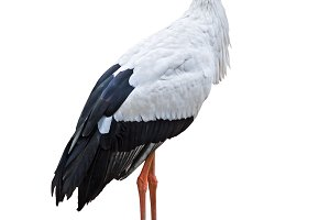 White Stork bird cutout