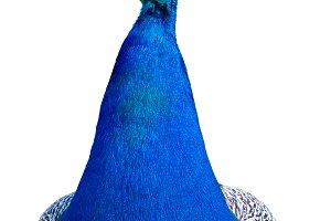 Peacock cutout