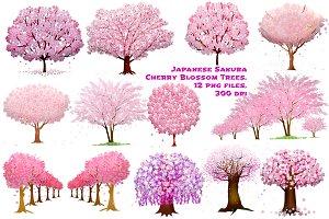 Cherry Blossom Sakura Trees