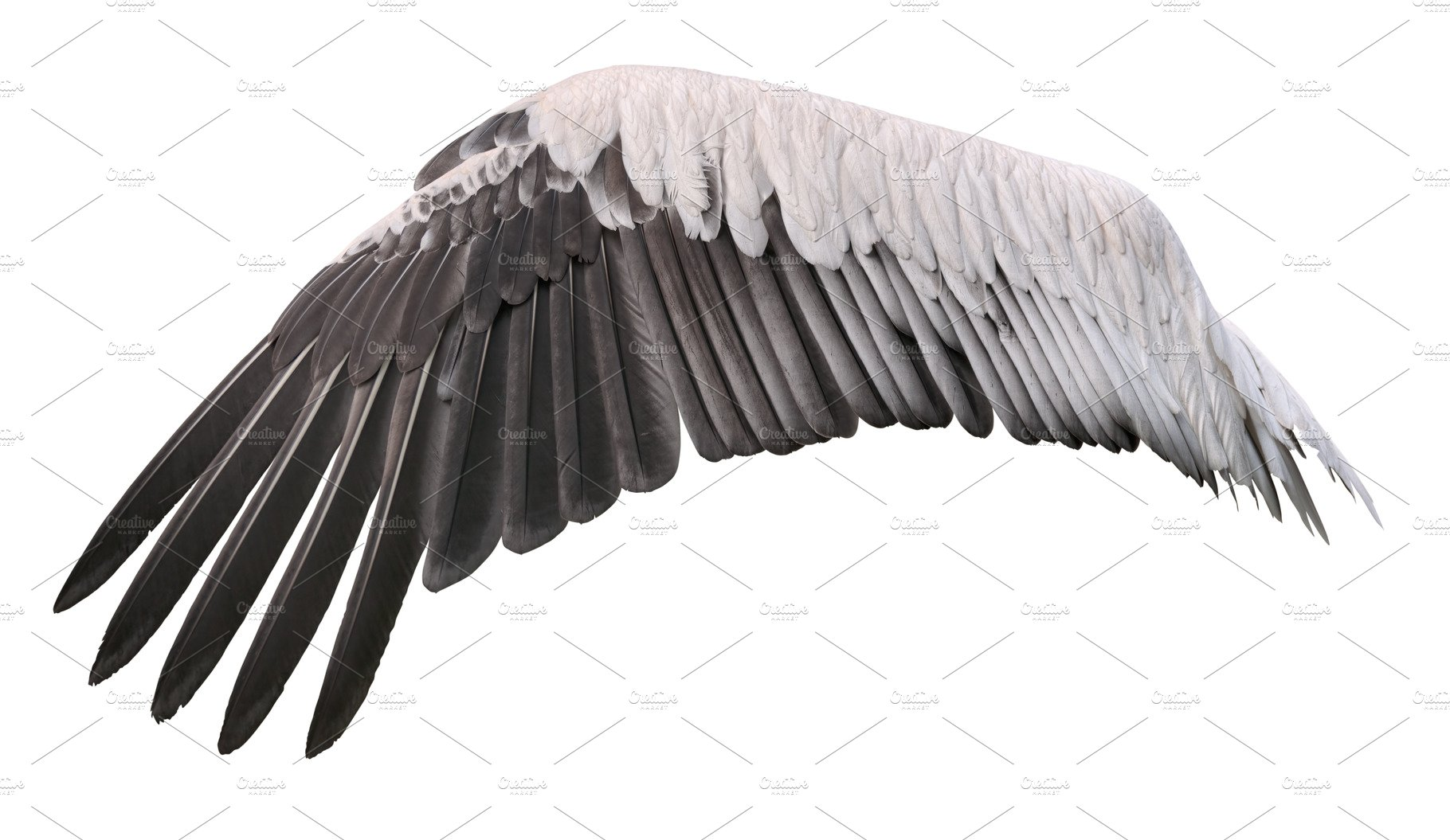 Wing Of Great Pelican Cutout High Quality Animal Stock Photos Creative Market
