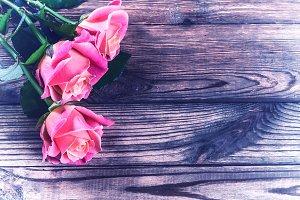 Vintage beautiful roses