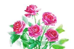 Bouquet of pink roses - watercolor