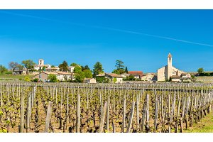 Vineyards near Saint Emilion, France