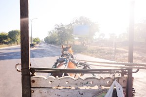 Horse rider's eye view on the road
