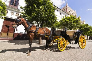 Seville vintage carriages , Spain