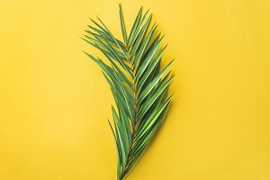 Green palm branch over bright yellow