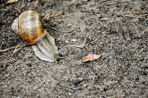 Snail crawling at the ground