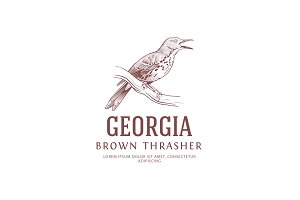 Vintage Logo: Brown Thrasher Bird