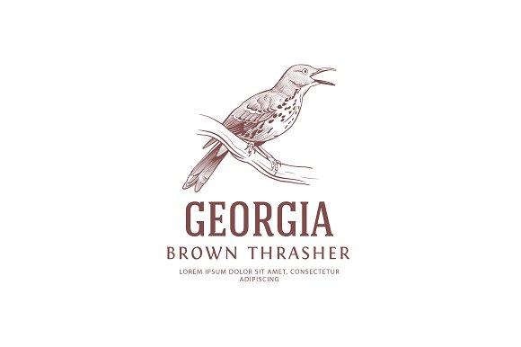 Vintage Logo Brown Thrasher Bird