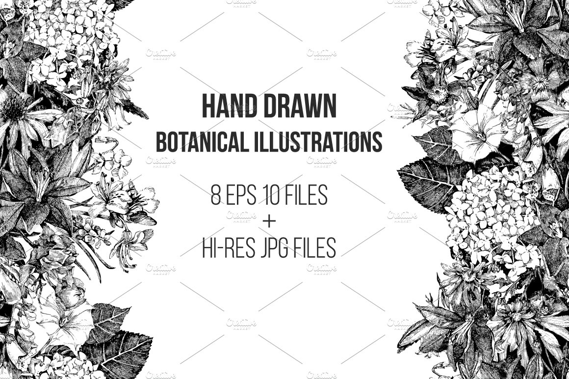 Botanical Floral Illustration Illustrations Creative Market