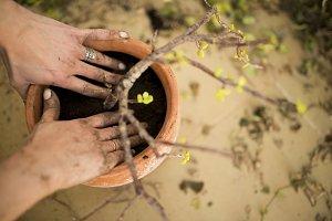 preparation and transplanting plant