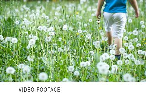 Child walking among dandelions