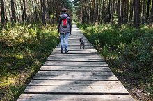 Woman walking dog on wooden pathway