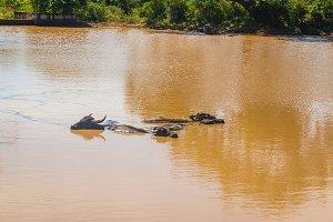 Yala National Park, Sri Lanka, Asia.