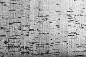 Cork Surface in Black and White