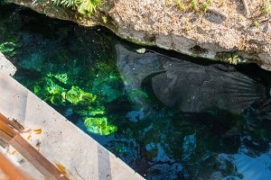antique Cleopatra pool