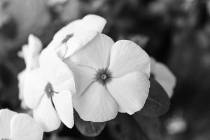 Flower Detail in Black and White