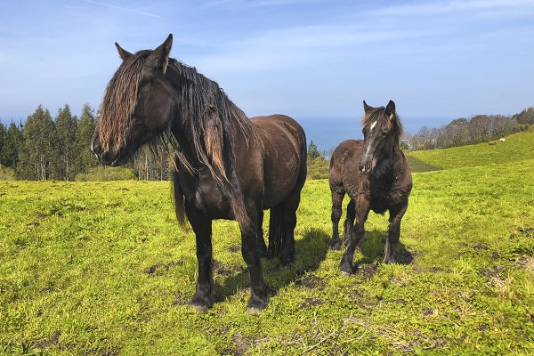 Animal Stock Photos: Brais Seara - Horses