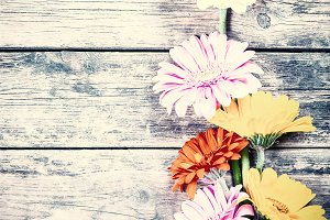 Background with gerbera